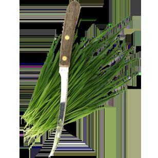 fresh cut wheatgrass